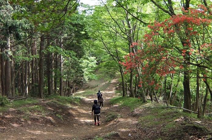 棒ノ折山登山道