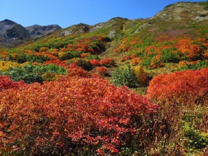 紅葉のお花松原