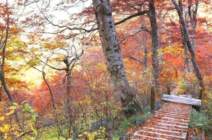 大山紅葉の登山道