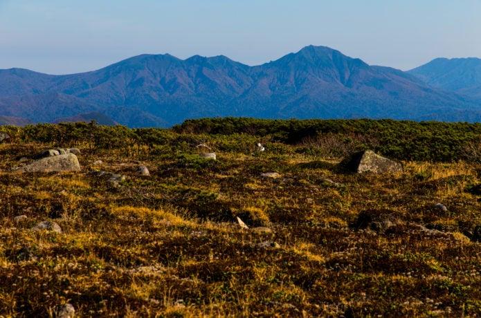 化雲岳から眺めるニペソツ山
