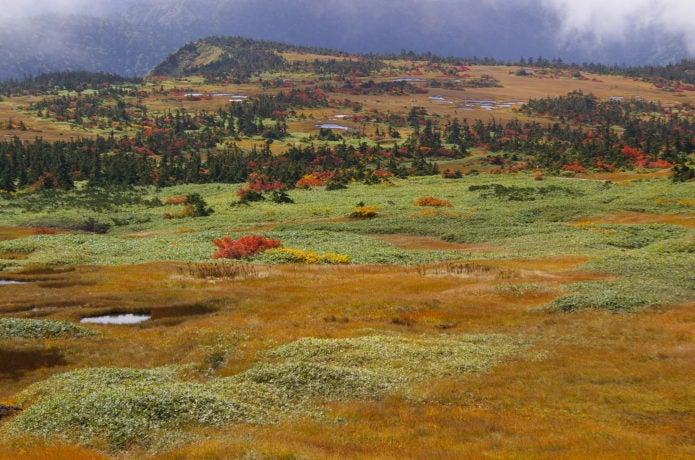苗場山頂の草紅葉