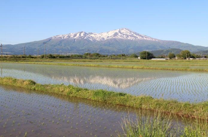 鳥海山と田んぼ