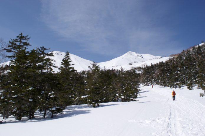 積雪期の乗鞍岳 樹林帯を登る様子