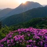 九重山と高山植物