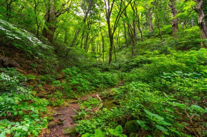 大山ユートピアコースの森の中