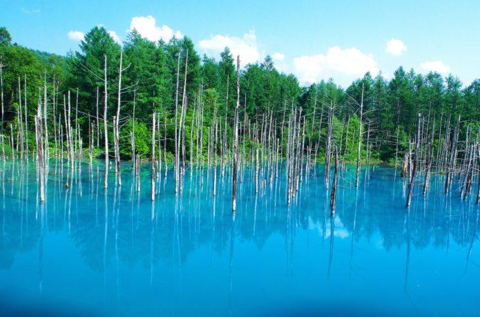 白金温泉の青い池