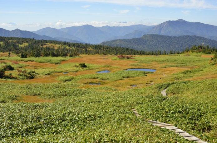 苗場山頂の湿原と木道