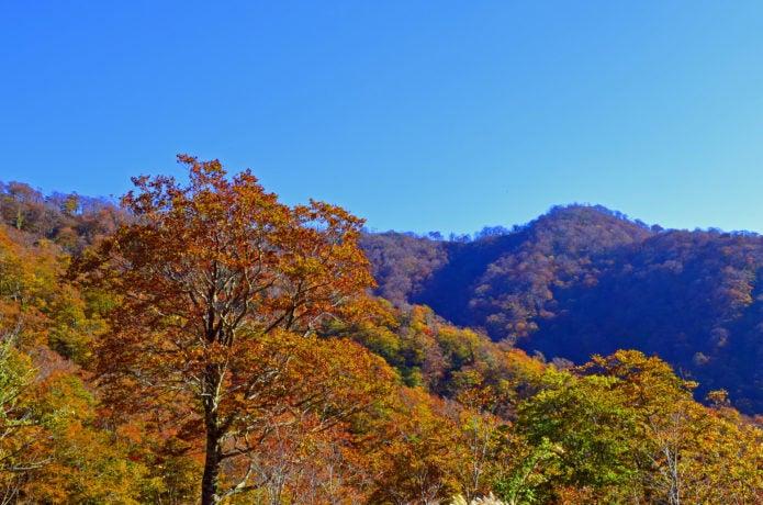 能郷白山の紅葉