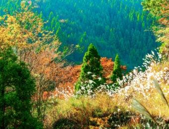 紅葉の氷ノ山
