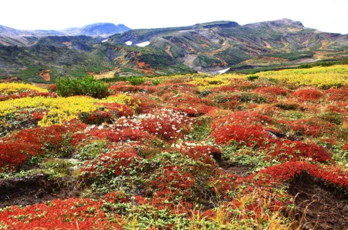 黒岳の紅葉【2018】日本一早い大雪山の絶景!おすすめコースや見どころスポット
